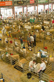 Sheep shed at the Royal Welsh Show Stock Photography