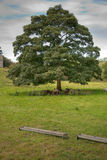 Sheep Sheltering Beneath a Lone Tree Stock Photography