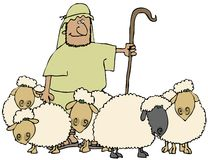 Sheep And Shepherd Stock Image