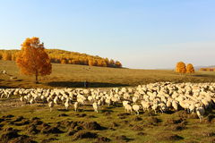 The sheep and the shepherd Stock Photography