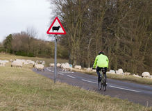 Sheep sign and sheep in road Stock Photos