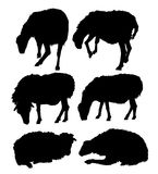 Sheep silhouette set- vector Stock Image