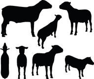 Sheep silhouette with standing still pose Stock Photos