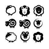 Sheep. Silhouettes of black and white sheep, included stock illustration