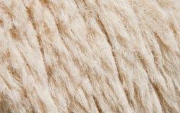 Sheep skin Background Stock Image