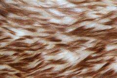 Sheep skin background Royalty Free Stock Image