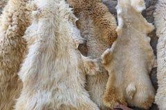 Sheep skins on sale in the village Lahij- Azerbaijan Stock Image