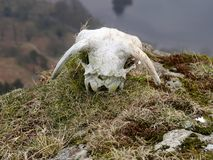 Sheep skull on hillside over lake Royalty Free Stock Images
