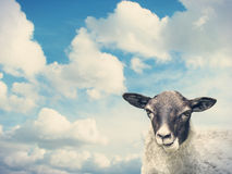 Sheep and the sky Royalty Free Stock Photos