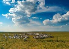 Sheep and Sky Royalty Free Stock Photos