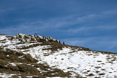 Sheep in the snow. A little flock of sheep in mountain landscape with first snow Stock Images