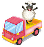 A sheep standing at the back of a truck Stock Photo