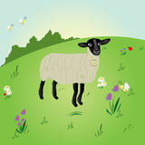 Sheep standing in a field Stock Photos