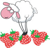 Sheep on strawberry. Vector illustration of sheep in strawberry field Stock Image
