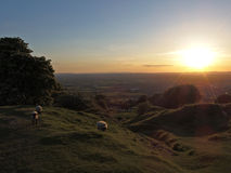 Sheep & sunset Royalty Free Stock Photo