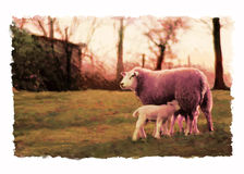 Sheep at sunset illustration. Painting of sheep and lambs at sunset. Based on my photography stock illustration