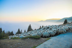 Sheep on top of the mountain Royalty Free Stock Photography