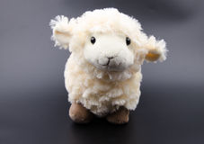 Sheep toy  on a black background Stock Image