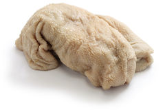 Sheep tripe Stock Image