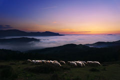 Sheep at twilight in Saibi mountain. Flock of sheep at twilight in Saibi mountain royalty free stock images