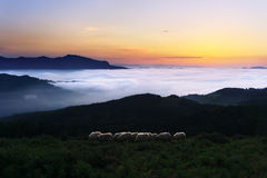 Sheep at twilight in Saibi mountain Stock Photography