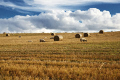 Sheep under clouds Stock Photos
