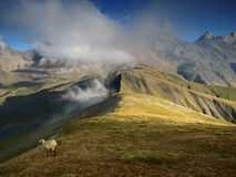Sheep under three peaks Aiguilles d'Arves in French Alps, France. Aiguilles d'Arves, Grandes Rousses, Dauphine Alps, France Stock Photos