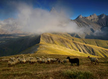 Sheep under three peaks Aiguilles d'Arves in French Alps, France. Royalty Free Stock Images