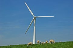 Sheep under windmill on dike Stock Images