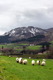 Sheep in Urkiola Stock Photography