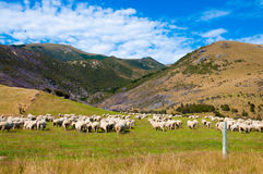 Sheep at the valley Royalty Free Stock Photos