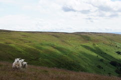 Sheep in the Valley of Llanthony priory Stock Photo
