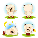 Sheep  in a variety of actions Royalty Free Stock Photography