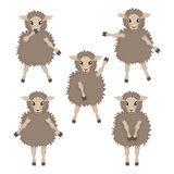 Sheep in various poses Stock Photography