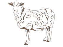 Sheep vector Stock Photography