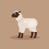 Sheep. Vector Illustration Royalty Free Stock Photos
