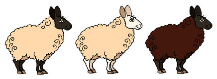 Sheep. Vector illustration of a 3 cartoon sheeps Stock Images