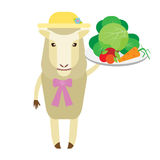 Sheep with vegetables Stock Photography