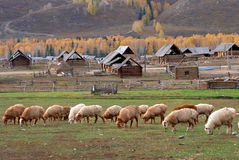 Sheep and village Stock Photography