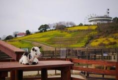 Sheep waiting for something Stock Photo