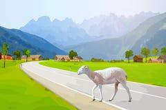 Sheep walking Stock Image