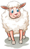 A sheep. On a white background Royalty Free Stock Photo