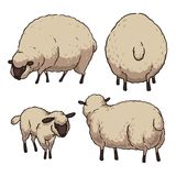 Sheep on white background Royalty Free Stock Photography
