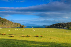 Sheep in a wide mountain landscape Stock Image