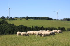 Sheep and Wind Turbines Royalty Free Stock Photos