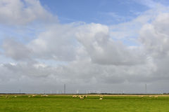 Sheep and wind turbines at Romney Marsh Royalty Free Stock Photography