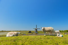 Sheep and windmill at Dutch island Texel Stock Photography
