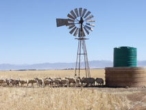 Sheep and windpump Stock Photos