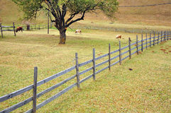 Sheep and wooden fence Royalty Free Stock Photo