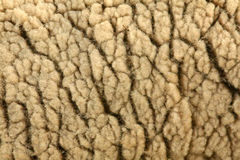 Sheep Wool. Closeup image of a sheep showing the details of the wool Royalty Free Stock Photo